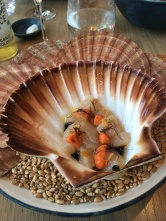 Raw Norwegian Scallop